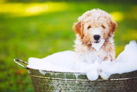 mobile pet grooming sweetwater fl