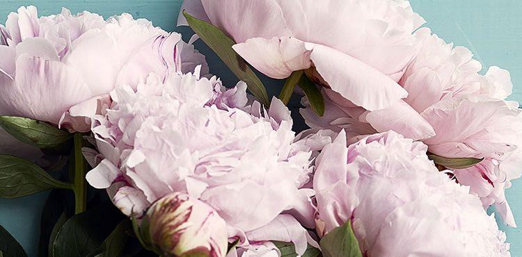 get well soon flowers